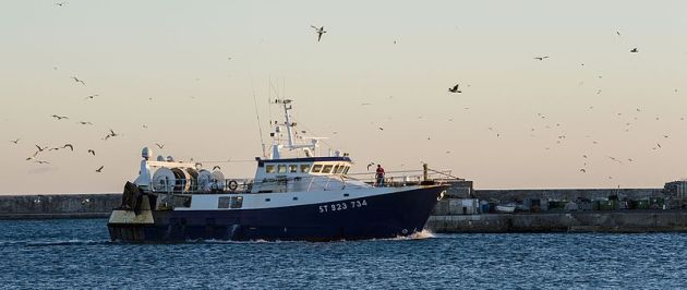 Gulls_over_a_fishing_trawler_Ste_01